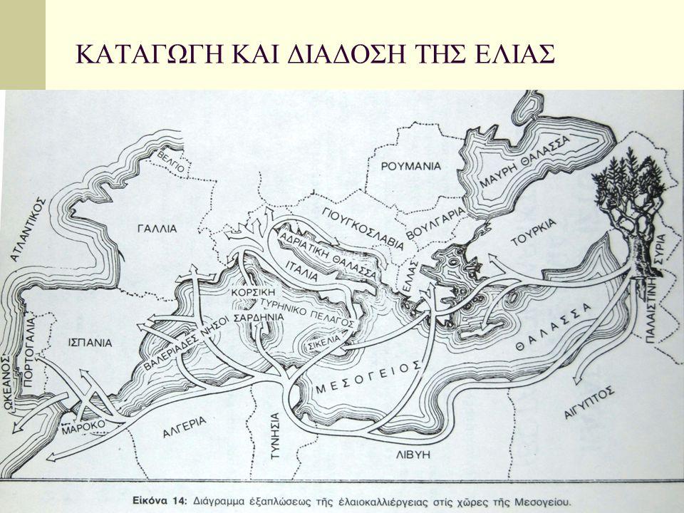 Ελαιοκαλλιέργεια στην Ελλάδα Φαίνεται ότι από τα προϊστορικά χρόνια ήταν συστηματική η καλλιέργεια ελαιόδεντρων (στη Κρήτη –ήμερη ελιά στη νεολιθική) Δυτική Ελλάδα δείγματα γύρης ελιάς 2000 π.χ.