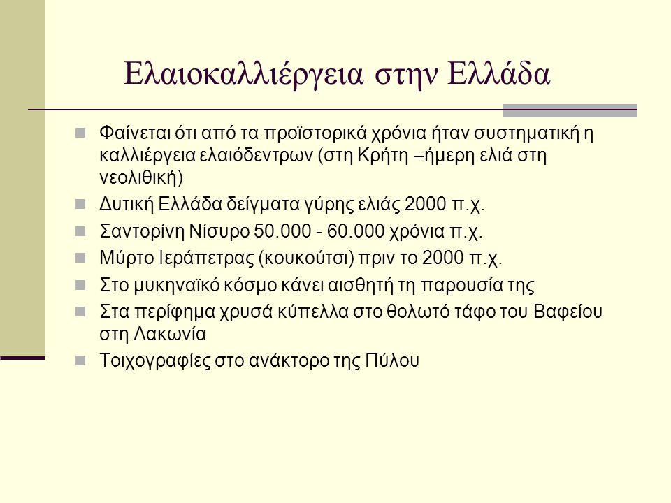 Ελαιοκαλλιέργεια στην Ελλάδα Τα ρωμαϊκά χρόνια μέτρα μη έλλειψης λαδιού ΟΙ Ενετοί μέτρα προστασίας της ελαιοκαλιεργειας –πρωτοφανής άνθηση Το ίδιο επί Βυζαντινής εποχής Κατά το 1821 έχουμε μεγάλη καταστροφή ελαιόδεντρων Από το 1830 το κράτος δίνει μεγάλη σημασία με μια σειρά νομοθετήματα Από και μετά έχουμε μια συνεχή ανάπτυξη σε όλο τον ελλαδικό χώρο