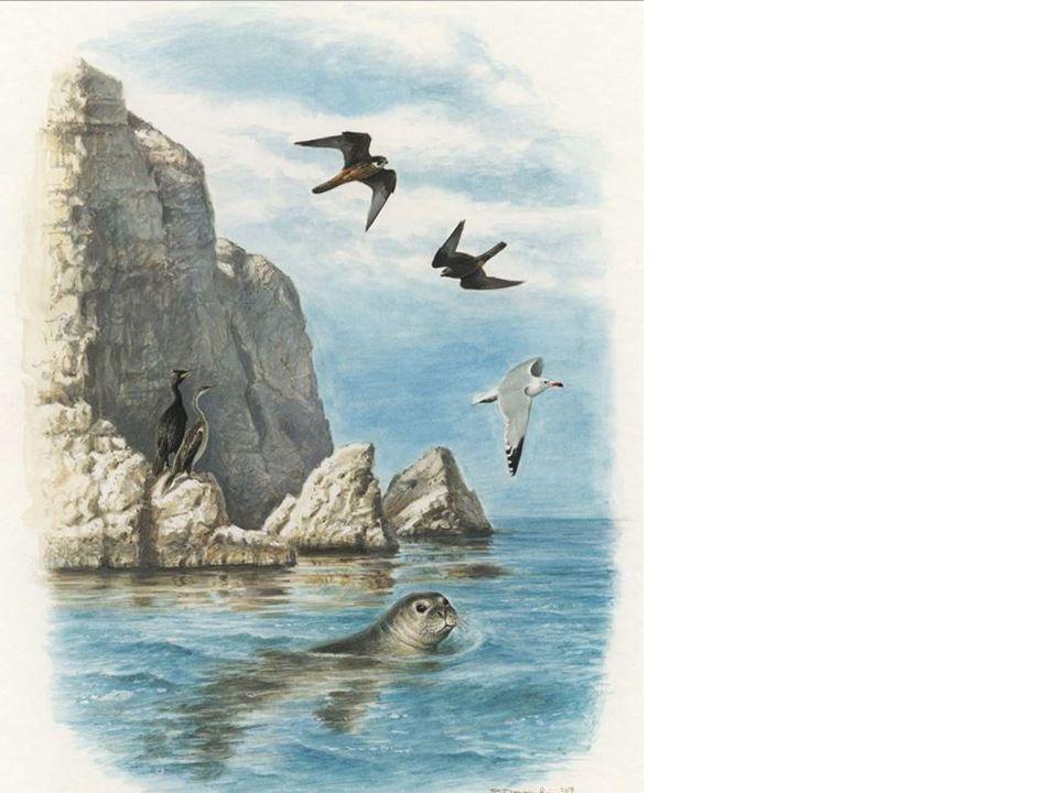 Τα όρη Αν. Λακωνίας περιλαμβάνουν ένα σημαντικό νησί Δασκαλιό