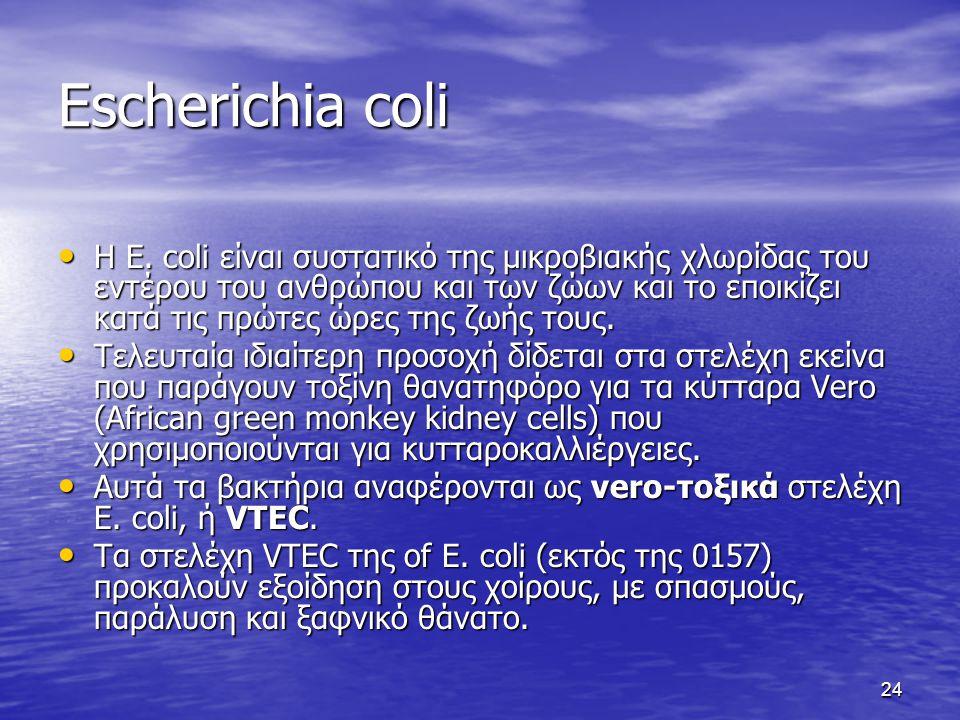 24 Escherichia coli Η Ε. coli είναι συστατικό της μικροβιακής χλωρίδας του εντέρου του ανθρώπου και των ζώων και το εποικίζει κατά τις πρώτες ώρες της
