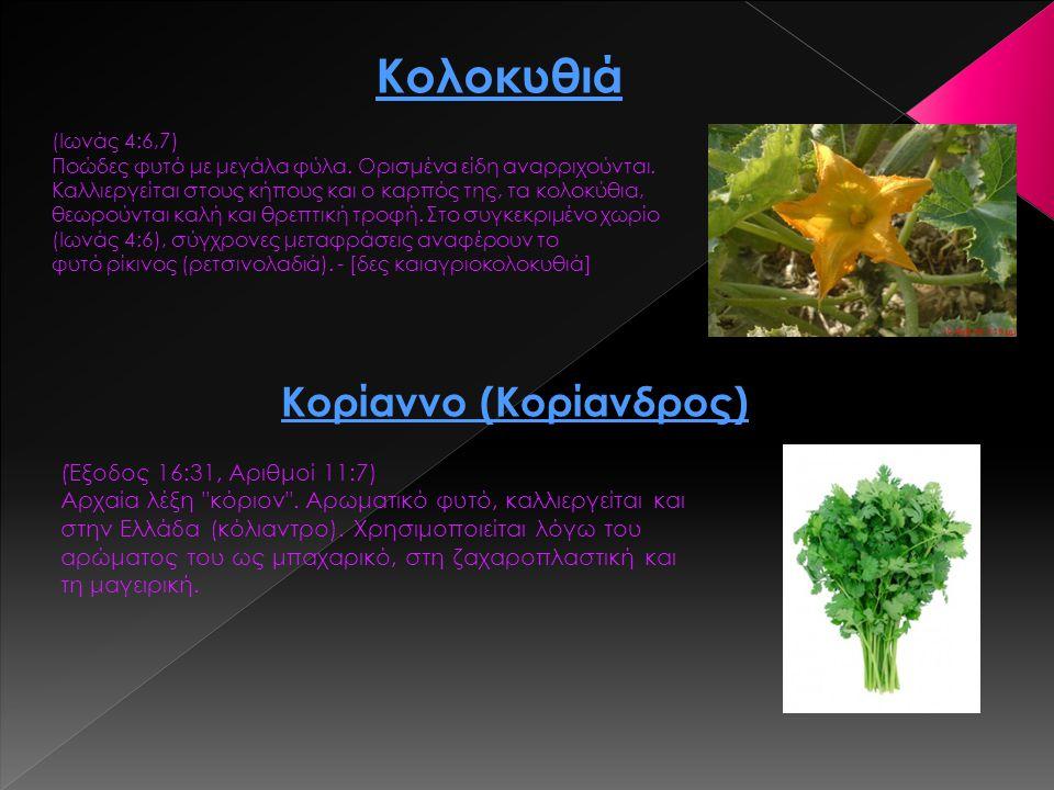 Κολοκυθιά (Ιωνάς 4:6,7) Ποώδες φυτό με μεγάλα φύλα. Ορισμένα είδη αναρριχούνται. Καλλιεργείται στους κήπους και ο καρπός της, τα κολοκύθια, θεωρούνται