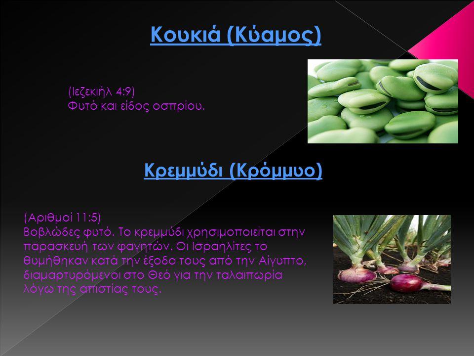Κουκιά (Κύαμος) (Ιεζεκιήλ 4:9) Φυτό και είδος οσπρίου. Κρεμμύδι (Κρόμμυο) (Αριθμοί 11:5) Βοβλώδες φυτό. Το κρεμμύδι χρησιμοποιείται στην παρασκευή των