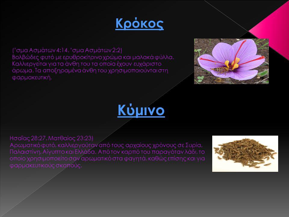Κρόκος ('σμα Ασμάτων 4:14, 'σμα Ασμάτων 2:2) Βολβώδες φυτό με ερυθροκίτρινο χρώμα και μαλακά φύλλα. Καλλιεργείται για τα άνθη του τα οποία έχουν ευχάρ