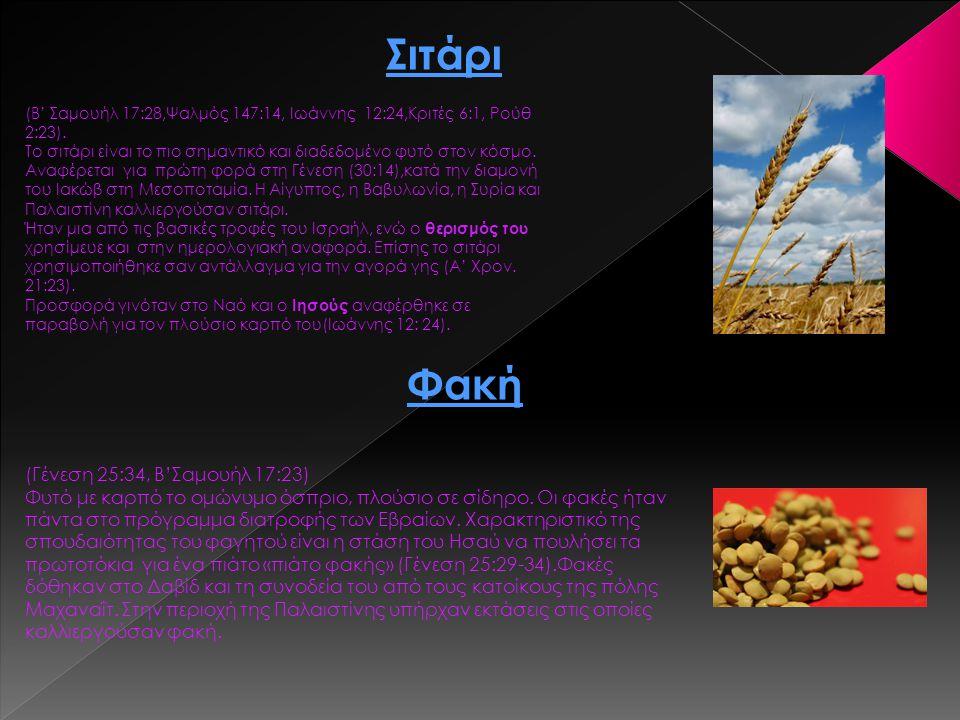 Σιτάρι (Β' Σαμουήλ 17:28,Ψαλμός 147:14, Ιωάννης 12:24,Κριτές 6:1, Ρούθ 2:23). Το σιτάρι είναι το πιο σημαντικό και διαδεδομένο φυτό στον κόσμο. Αναφέρ