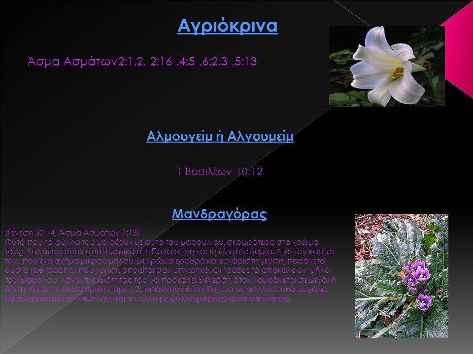 Αγριόκρινα Άσμα Ασμάτων2:1,2, 2:16,4:5,6:2,3,5:13 Αλμουγείμ ή Αλγουμείμ 1 Βασιλέων 10:12 Μανδραγόρας (Γένεση 30:14, Άσμα Ασμάτων 7:13) Φυτό που τα φύλ