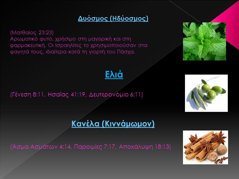 Δυόσμος (Ηδύοσμος) (Ματθαίος 23:23) Αρωματικό φυτό, χρήσιμο στη μαγειρική και στη φαρμακευτική. Οι Ισραηλίτες το χρησιμοποιούσαν στα φαγητά τους, ιδια