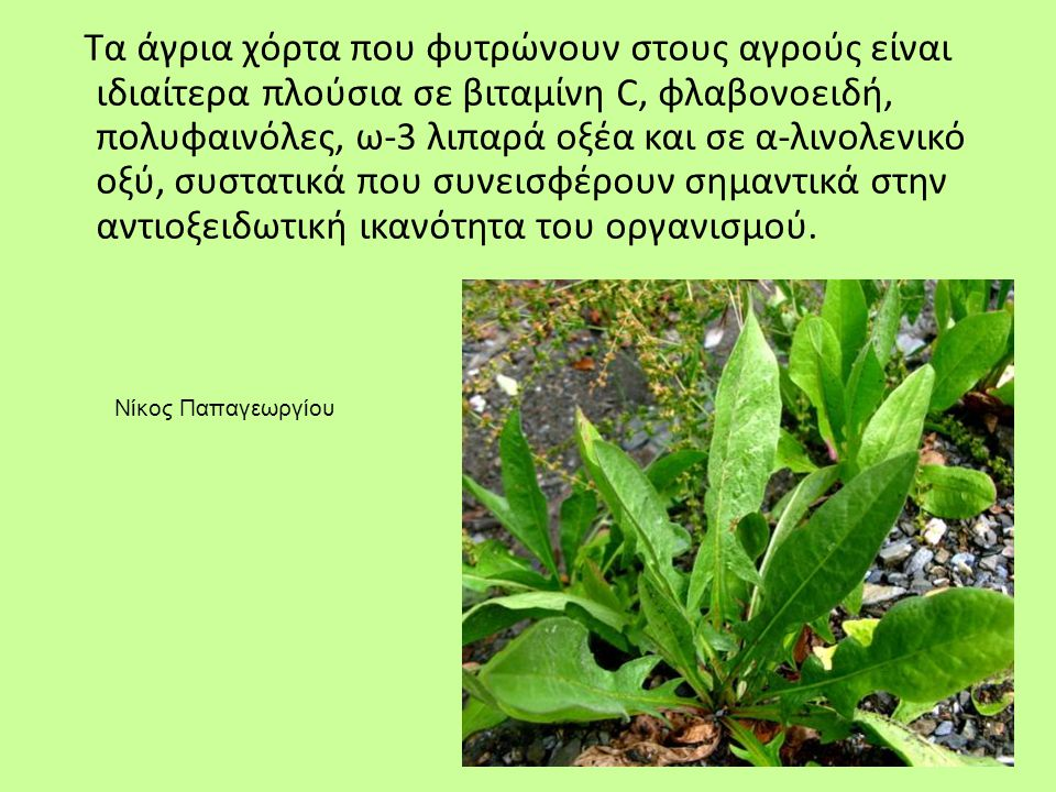 Τα άγρια χόρτα που φυτρώνουν στους αγρούς είναι ιδιαίτερα πλούσια σε βιταμίνη C, φλαβονοειδή, πολυφαινόλες, ω-3 λιπαρά οξέα και σε α-λινολενικό οξύ, σ