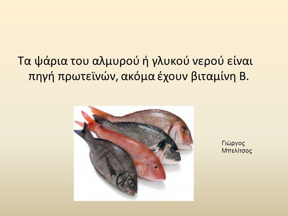 Τα ψάρια του αλμυρού ή γλυκού νερού είναι πηγή πρωτεϊνών, ακόμα έχουν βιταμίνη Β. Γιώργος Μπελίτσος