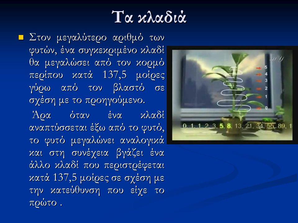 Τα κλαδιά Στον μεγαλύτερο αριθμό των φυτών, ένα συγκεκριμένο κλαδί θα μεγαλώσει από τον κορμό περίπου κατά 137,5 μοίρες γύρω από τον βλαστό σε σχέση μ