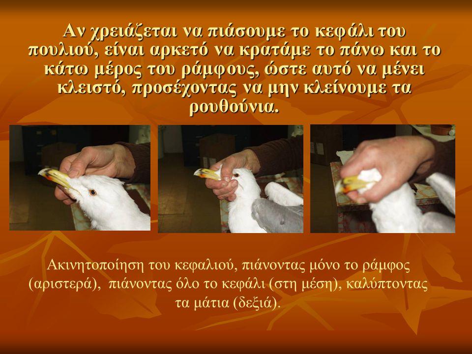 Αν χρειάζεται να πιάσουμε το κεφάλι του πουλιού, είναι αρκετό να κρατάμε το πάνω και το κάτω μέρος του ράμφους, ώστε αυτό να μένει κλειστό, προσέχοντας να μην κλείνουμε τα ρουθούνια.