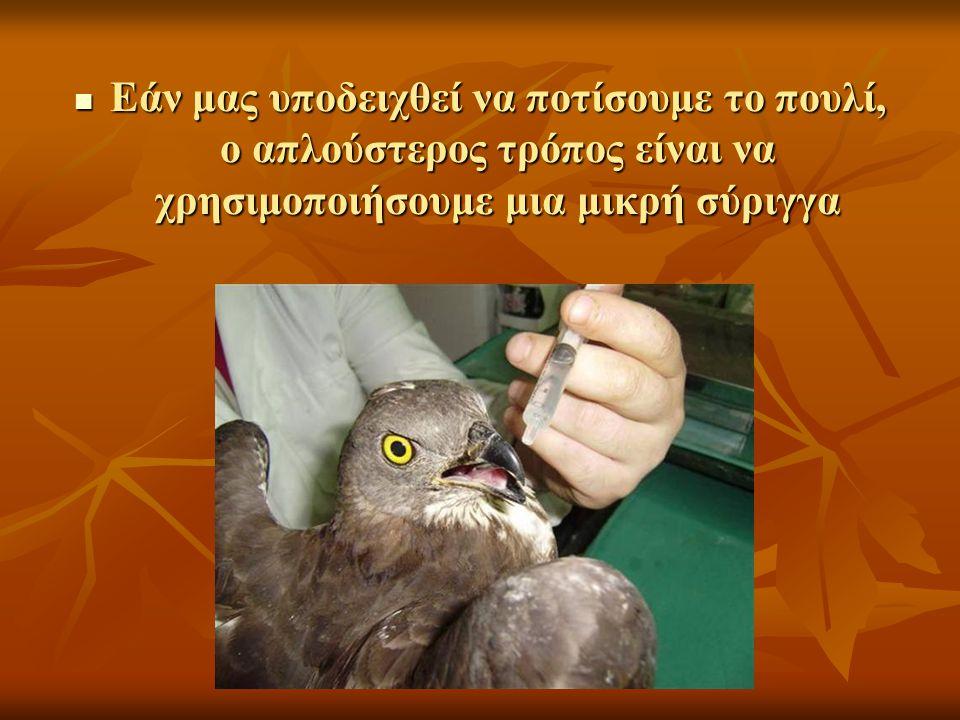 Εάν μας υποδειχθεί να ποτίσουμε το πουλί, ο απλούστερος τρόπος είναι να χρησιμοποιήσουμε μια μικρή σύριγγα Εάν μας υποδειχθεί να ποτίσουμε το πουλί, ο απλούστερος τρόπος είναι να χρησιμοποιήσουμε μια μικρή σύριγγα