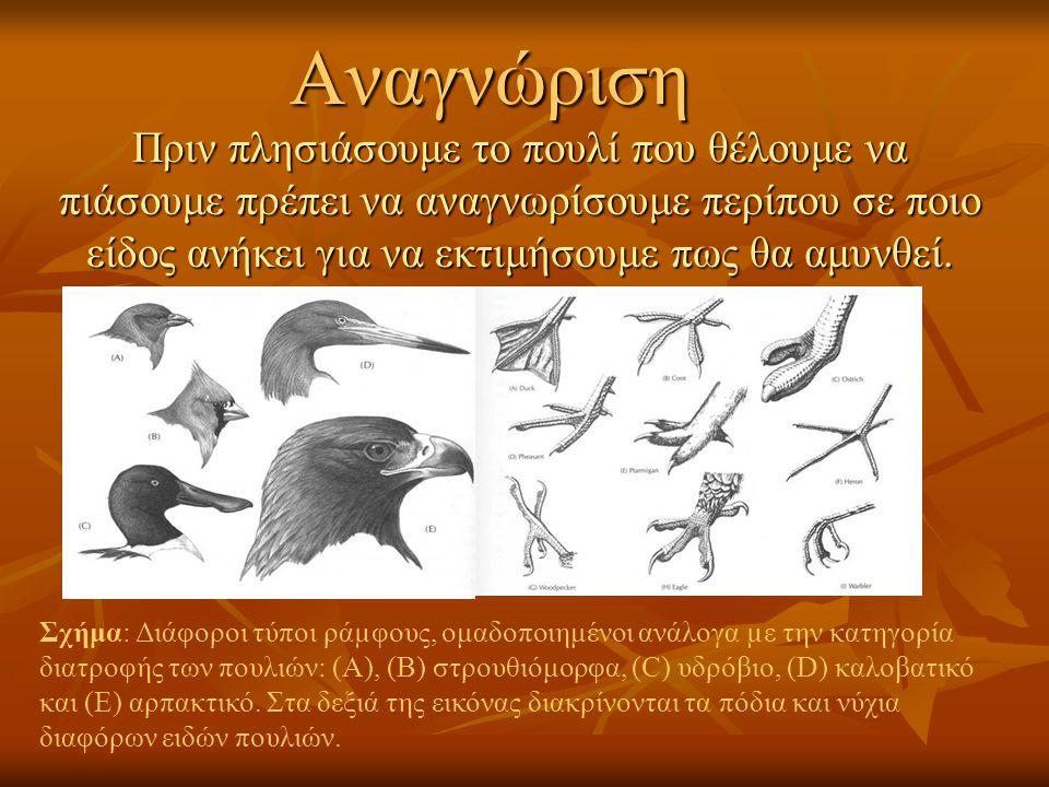 Αναγνώριση Πριν πλησιάσουμε το πουλί που θέλουμε να πιάσουμε πρέπει να αναγνωρίσουμε περίπου σε ποιο είδος ανήκει για να εκτιμήσουμε πως θα αμυνθεί.
