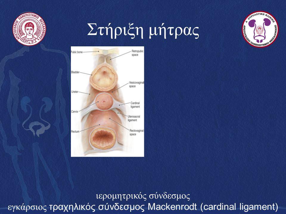 Στήριξη μήτρας ιερομητρικός σύνδεσμος εγκάρσιος τραχηλικός σύνδεσμος Mackenrodt (cardinal ligament)