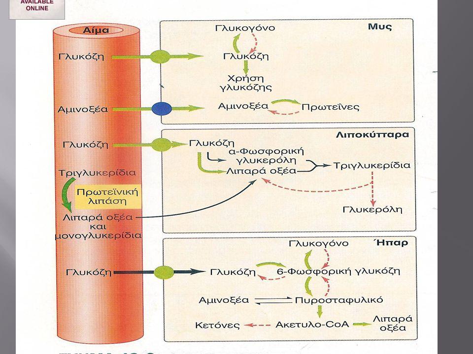 Λεπτίνη + - Ινσουλίνη