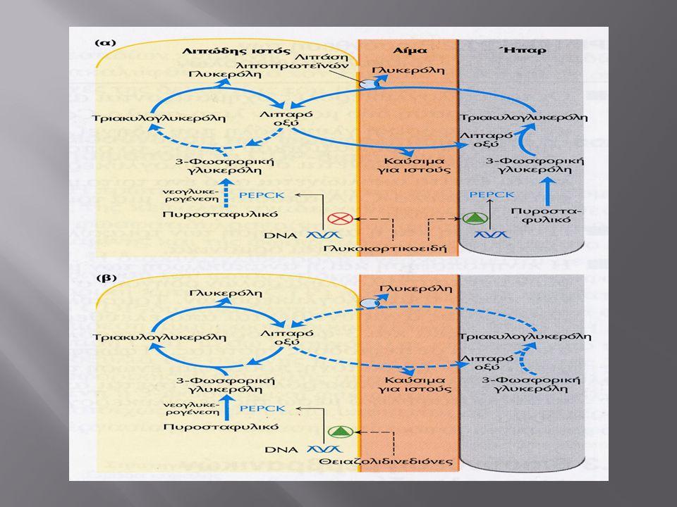  Αναστέλλει την πρόσληψη τροφής : - αναστέλλει την έκκριση του ορεξιογόνου Νευροπεπτιδίου Υ - διεγείρει την έκκριση της ανορεξιογόνου a-MSH - διεγείρει το Συμπαθητικό Ν.