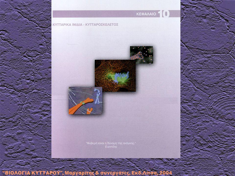 ΚΥΤΤΑΡΙΚΑ ΙΝΙΔΙΑ - ΚΥΤΤΑΡΟΣΚΕΛΕΤΟΣ 10.1.Γενικά 10.2.Μικροϊνίδια (ακτίνη) 10.2.1.Γενικά 10.2.2.Συμμετοχή της ακτίνης στους κυτταρικούς μηχανισμούς κίνησης 10.2.3.Δυναμική της ακτίνης 10.2.3.1.Ο αυθόρμητος πολυμερισμός της ακτίνης (πυρήνωση) 10.2.3.2.Το ισοζύγιο της ακτίνης 10.2.3.3.Δενδριτική πυρήνωση ακτίνης – Σύμπλεγμα Arp2/3 και πρωτεΐνες WASp/Scar 10.2.3.4.Ο ρόλος της τροπομοντουλίνης 10.2.3.5.Μετασχηματισμοί πηκτώματος - λύματος 10.2.3.6.Ο ρόλος του ασβεστίου και των φωσφοϊνοσιτιδίων 10.2.4.Πρωτεΐνες με ειδικό ρόλο που αλληλεπιδρούν με ακτίνη 10.2.4.1.Η οικογένεια της πηκτωλυματίνης στα θηλαστικά Λειτουργικές περιοχές και ρύθμιση του μορίου της πηκτωλυματίνης Απογονιδιακά (knockout) ποντίκια ως προς την πηκτωλυματίνη 10.2.4.2.Το σύμπλοκο καδερίνης-κατενίνης 10.2.4.3.Μικρές πρωτεΐνες που δεσμεύουν GTP (smGTPases) 10.3.Ενδιάμεσα ινίδια 10.3.1.Γενικά 10.3.2.Χαρακτηριστικοί τύποι ενδιάμεσων ινιδίων 10.3.2.1.Κερατίνες ή τονοϊνίδια 10.3.2.2.Δεσμίνη 10.3.2.3.Βιμεντίνη 10.3.2.4.Νευροϊνίδια και ινίδια γλοίας 10.3.3.Ενδοκυττάρια οργάνωση και κατανομή των ενδιάμεσων ινιδίων 10.4.Μικροσωληνίσκοι 10.4.1.Γενικά 10.4.2.Μηχανισμός πυρήνωσης των μικροσωληνίσκων 10.4.3.Δυναμική των μικροσωληνίσκων 10.4.3.1.Κατανίνες 10.4.3.2.Σταθμίνες