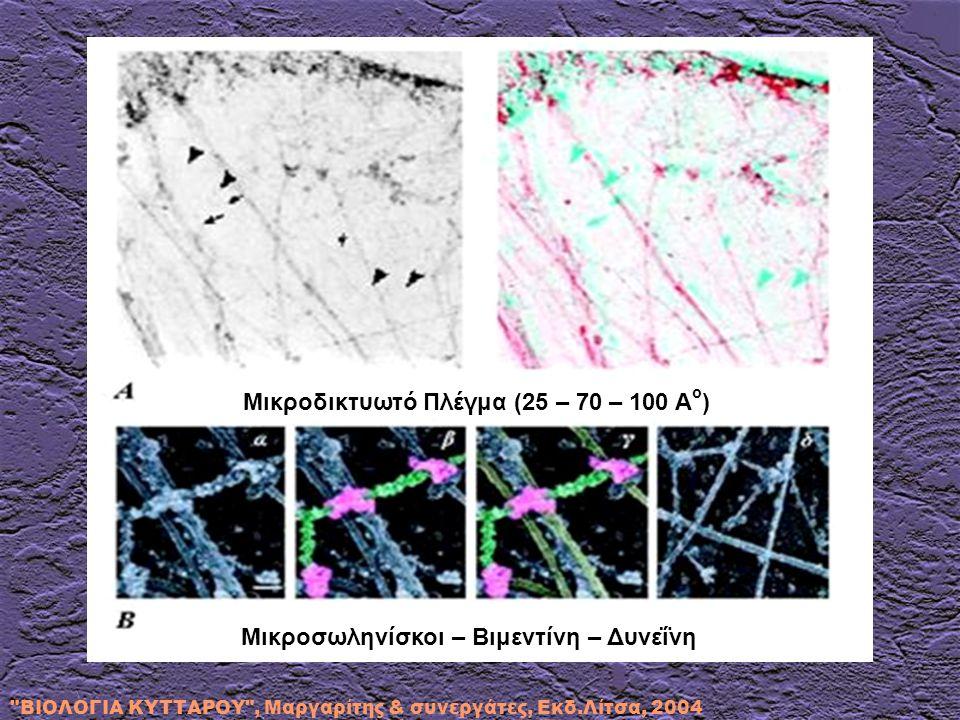 Μικροσωληνίσκοι – Βιμεντίνη – Δυνεΐνη Μικροδικτυωτό Πλέγμα (25 – 70 – 100 Α ο )