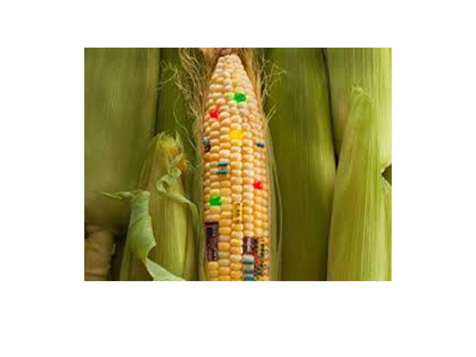 Οι πιθανές λύσεις Η λύση της βιολογικής γεωργίας και κτηνοτροφίας ακυρώνει την απειλή των μεταλλαγμένων.