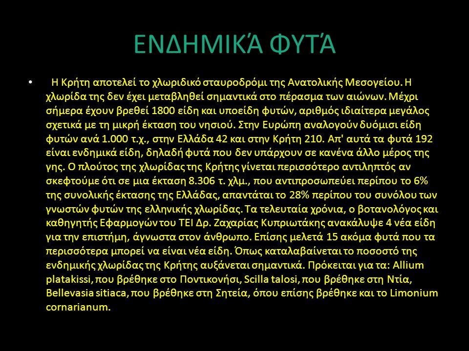 ΕΝΔΗΜΙΚΆ ΦΥΤΆ Η Κρήτη αποτελεί το χλωριδικό σταυροδρόμι της Ανατολικής Μεσογείου. Η χλωρίδα της δεν έχει μεταβληθεί σημαντικά στο πέρασμα των αιώνων.