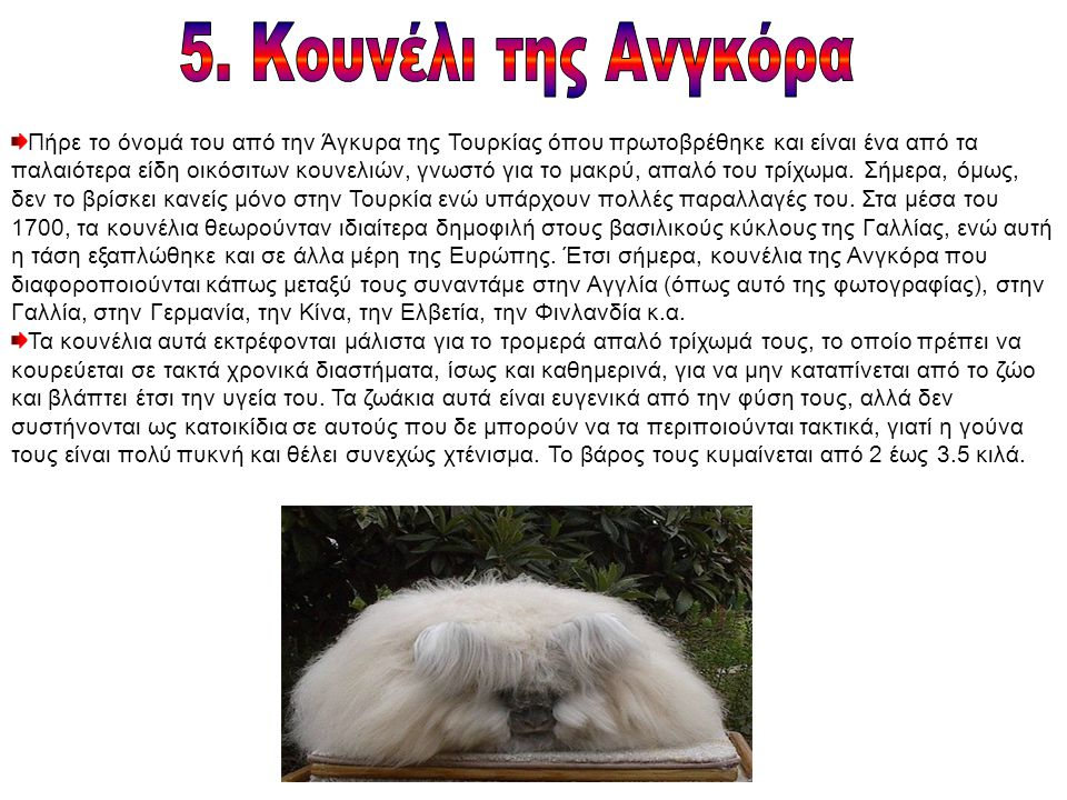 Πήρε το όνομά του από την Άγκυρα της Τουρκίας όπου πρωτοβρέθηκε και είναι ένα από τα παλαιότερα είδη οικόσιτων κουνελιών, γνωστό για το μακρύ, απαλό του τρίχωμα.