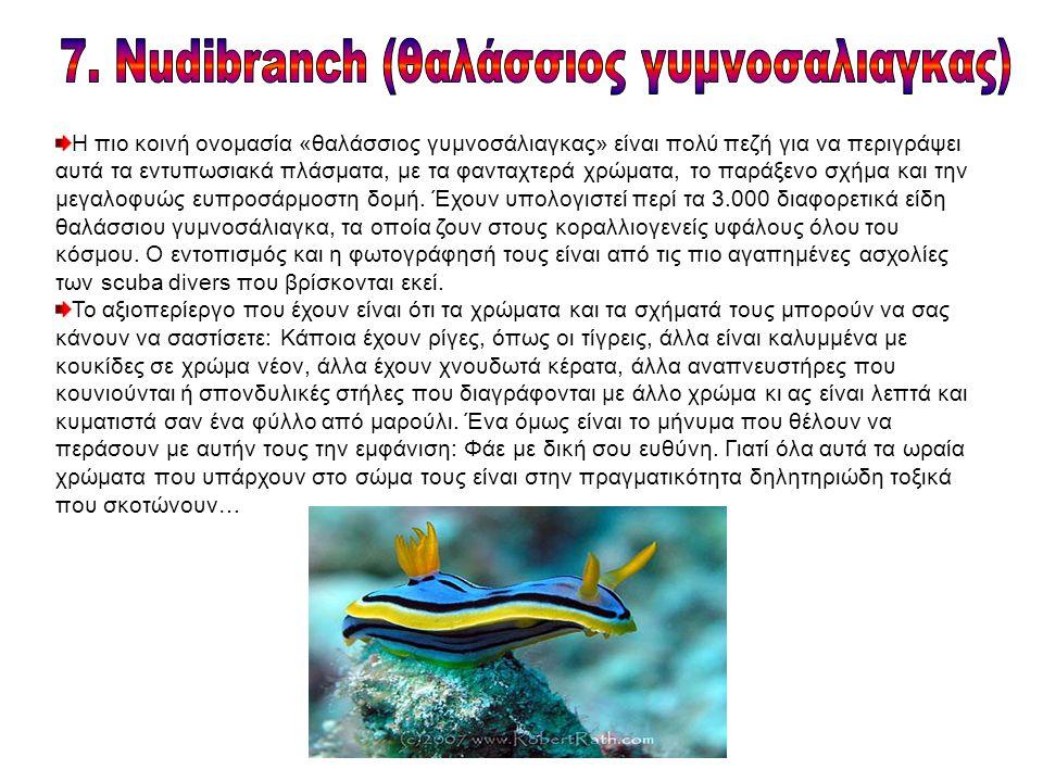 Η πιο κοινή ονομασία «θαλάσσιος γυμνοσάλιαγκας» είναι πολύ πεζή για να περιγράψει αυτά τα εντυπωσιακά πλάσματα, με τα φανταχτερά χρώματα, το παράξενο σχήμα και την μεγαλοφυώς ευπροσάρμοστη δομή.