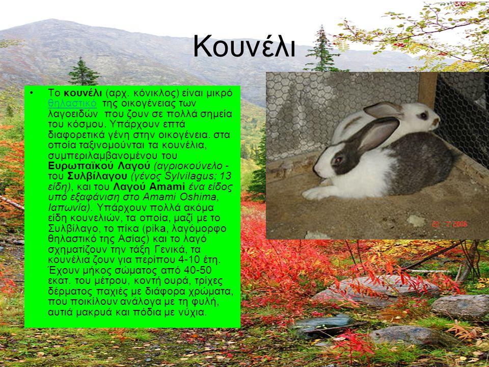 Κουνέλι Το κουνέλι (αρχ. κόνικλος) είναι μικρό θηλαστικό της οικογένειας των λαγοειδών που ζουν σε πολλά σημεία του κόσμου. Υπάρχουν επτά διαφορετικά