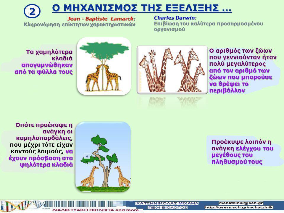 Οι καμηλοπαρδάλεις δημιουργήθηκαν από οργανισμούς κατώτερων βαθμίδων Δια μέσου της φυσικής κλίμακας Jean - Baptiste Lamarck: Κληρονόμηση επίκτητων χαρ