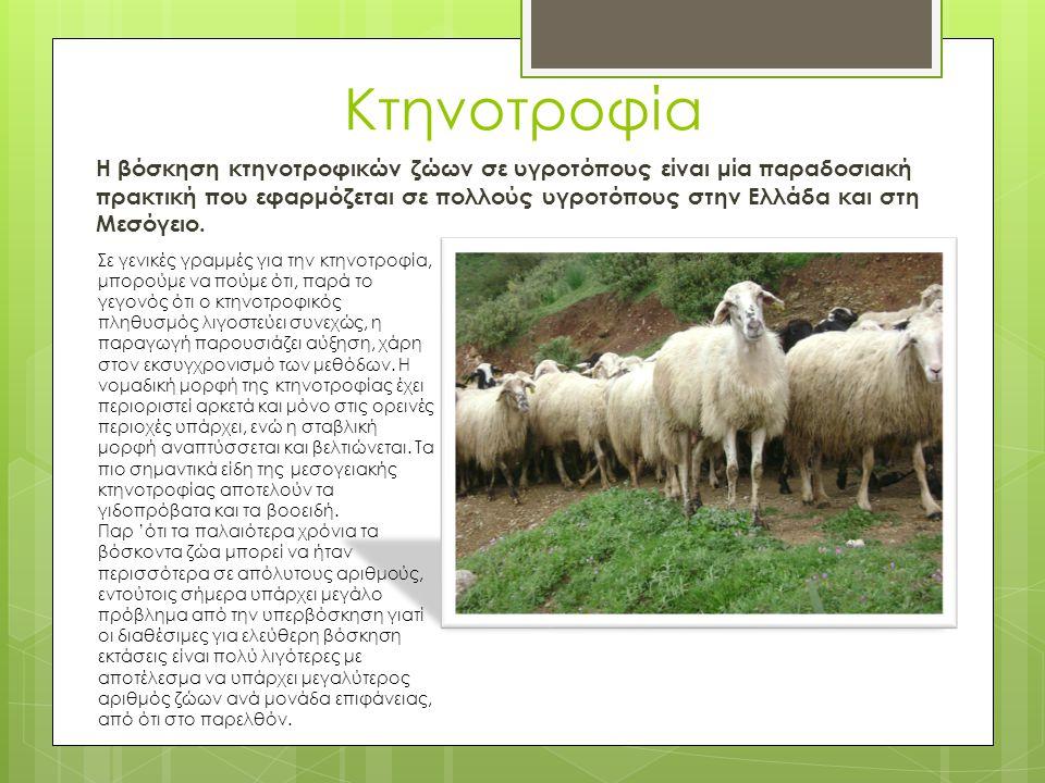 Κτηνοτροφία Η βόσκηση κτηνοτροφικών ζώων σε υγροτόπους είναι μία παραδοσιακή πρακτική που εφαρμόζεται σε πολλούς υγροτόπους στην Ελλάδα και στη Μεσόγε