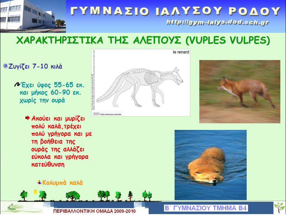 ΤΑΞΙΝΟΜΙΣΗ ΤΗΣ ΑΛΕΠΟΥΣ (VUPLES VULPES) Βασίλειο:AnimaliaΣυνομοταξία:Chordata Υποσυνομοταξία:Vertebrata Υποσυνομοταξία:Vertebrata Κλάση:Mammalia Τάξη:Carnivora Οικογένεια: Canidae Γένος:Vulpes Είδος:Vulpes vulpes