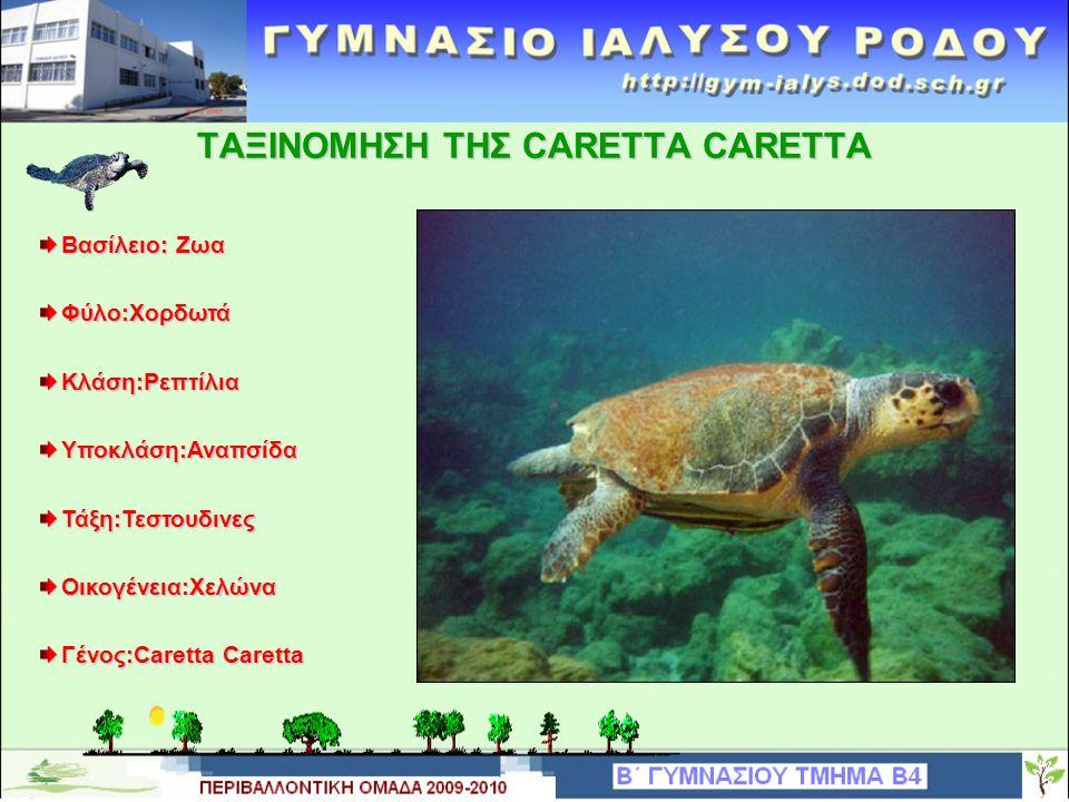 ΧΑΡΑΚΤΗΡΙΣΤΙΚΑ THΣ CARETTA CARETTA Η caretta-caretta είναι μετρίου μεγέθους χελώνα Tο μέγεθος από το καβούκι της φτάνει τα 120 εκατοστά και το βάρος της τα 100 κιλά Το στόμα της μοιάζει με ράμφος παπαγάλου Ζει στη θάλασσα αλλά έχει πνεύμονες με αποτέλεσμα να βγαίνει συχνά στην επιφάνεια της θάλασσας για να αναπνεύσει