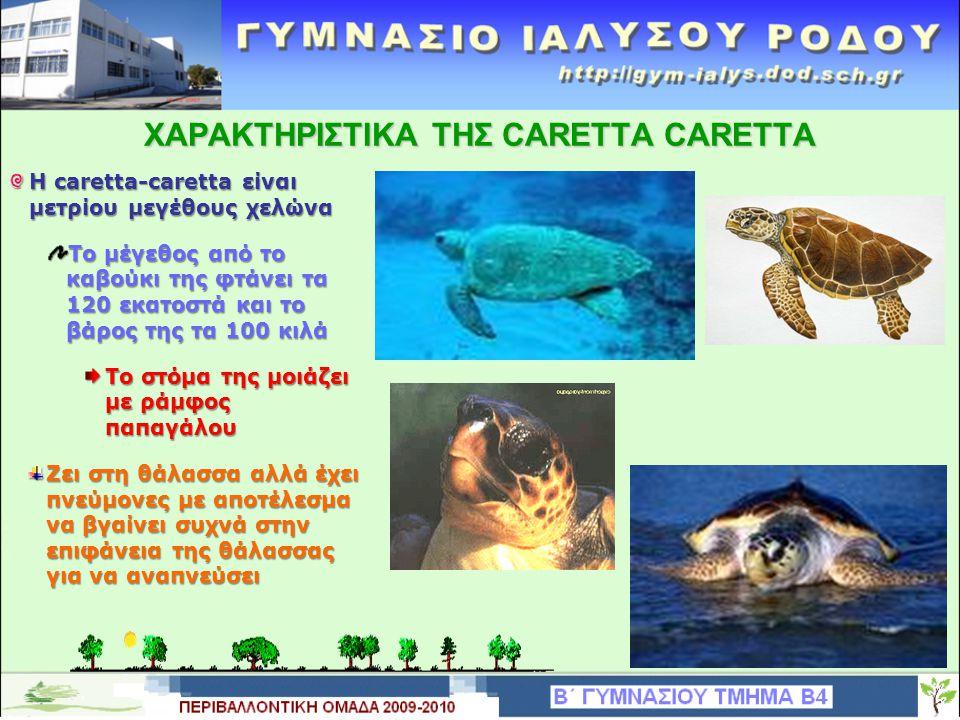 ΧΑΡΑΚΤΗΡΙΣΤΙΚΑ THΣ CARETTA CARETTA Η caretta-caretta είναι μετρίου μεγέθους χελώνα Tο μέγεθος από το καβούκι της φτάνει τα 120 εκατοστά και το βάρος τ