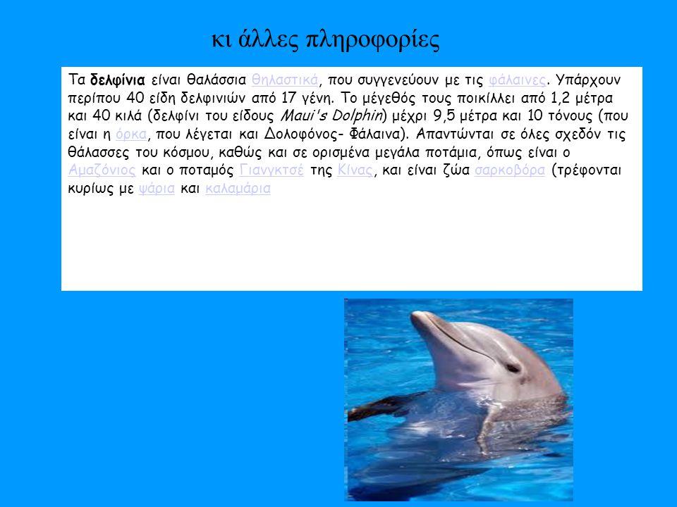 Δελφίνια που παίζουν