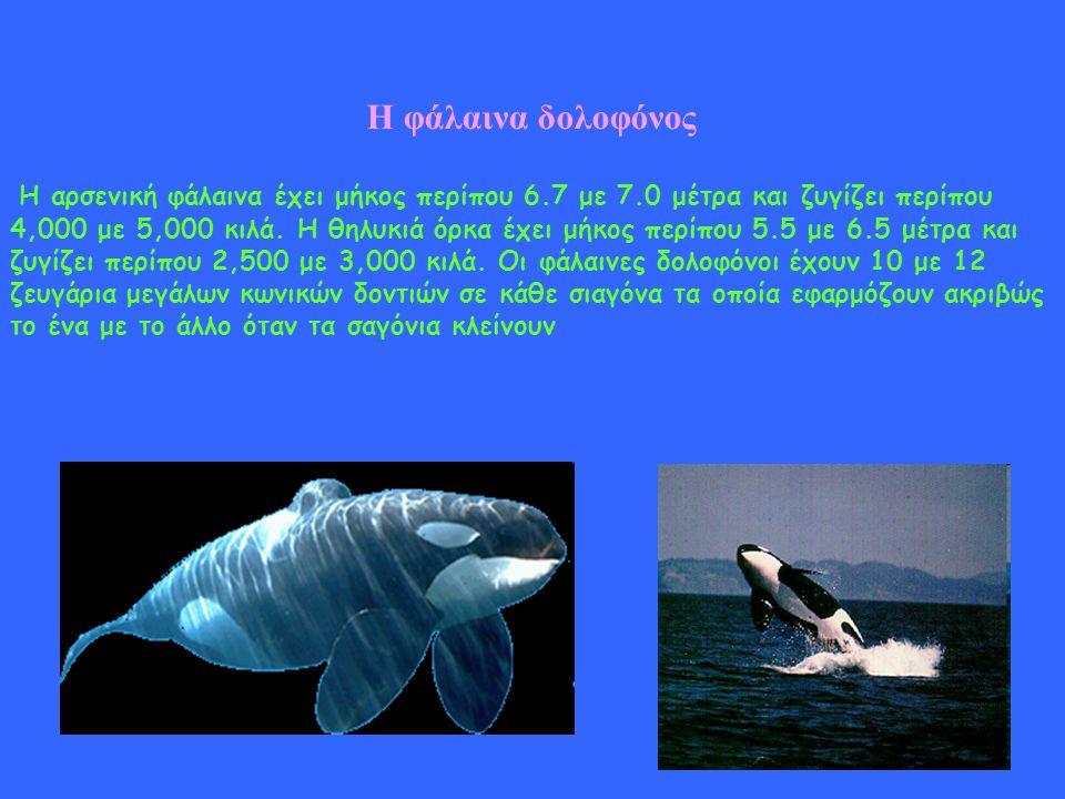 Η φάλαινα σε κίνδυνο Το 1986 η Διεθνής Επιτροπή Φαλαινοθηρίας (IWC) απαγόρευσε την εμπορική φαλαινοθηρία, φέρνοντας την ελπίδα σε πολλά είδη φαλαινών.