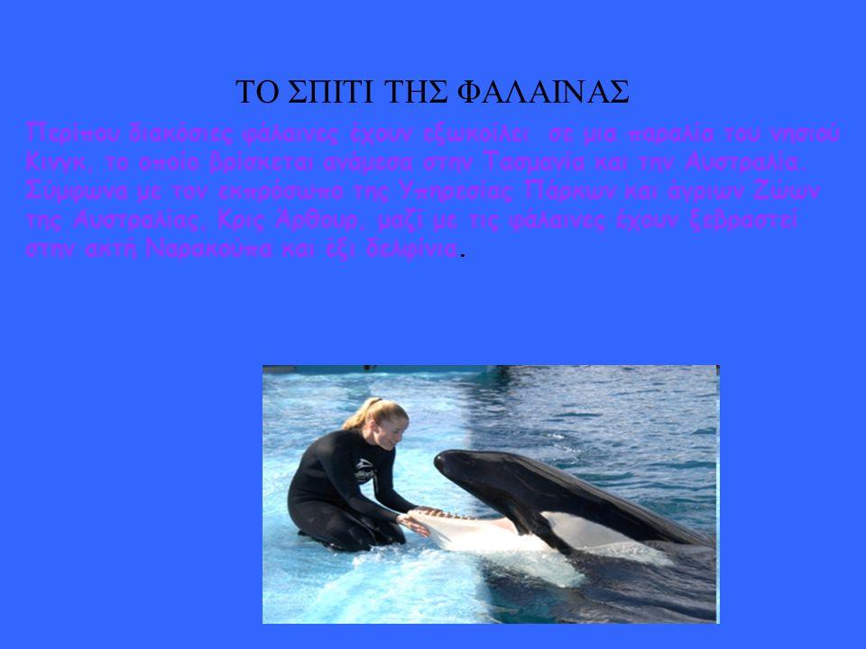 Η φάλαινα δολοφόνος Η αρσενική φάλαινα έχει μήκος περίπου 6.7 με 7.0 μέτρα και ζυγίζει περίπου 4,000 με 5,000 κιλά. Η θηλυκιά όρκα έχει μήκος περίπου