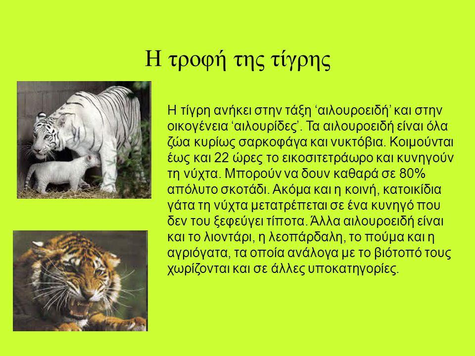 Ο πληθυσμός της τίγρης «Ο πληθυσμός της τίγρης είναι πια τόσο μικρός, που οι ελπίδες για βιωσιμότητα του είδους είναι ελάχιστες», κρούουν τον κώδωνα τ