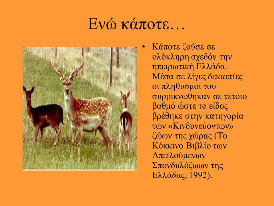 Στην Ελλάδα έχουν απομείνει… Οι πληθυσμοί του εντοπίζονται πλέον μόνο στην Πάρνηθα και περιορισμένα στη Ροδόπη, ενώ έχουν συρρικνωθεί σε τέτοιο βαθμό,