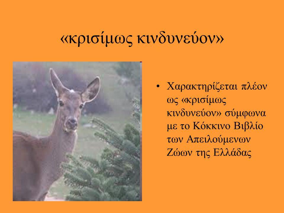 Ενώ κάποτε… Κάποτε ζούσε σε ολόκληρη σχεδόν την ηπειρωτική Ελλάδα. Μέσα σε λίγες δεκαετίες οι πληθυσμοί του συρρικνώθηκαν σε τέτοιο βαθμό ώστε το είδο