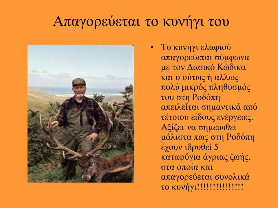 «κρισίμως κινδυνεύον» Χαρακτηρίζεται πλέον ως «κρισίμως κινδυνεύον» σύμφωνα με το Κόκκινο Βιβλίο των Απειλούμενων Ζώων της Ελλάδας