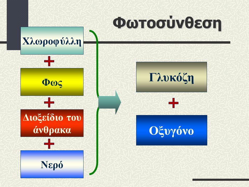 Φωτοσύνθεση Χλωροφύλλη ΦωςΝερό Διοξείδιο του άνθρακα Γλυκόζη Οξυγόνο