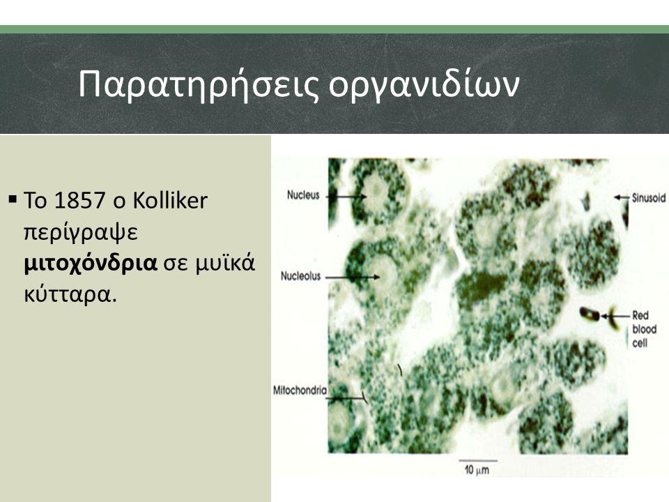 Παρατηρήσεις οργανιδίων  Το 1857 ο Kolliker περίγραψε μιτοχόνδρια σε μυϊκά κύτταρα.
