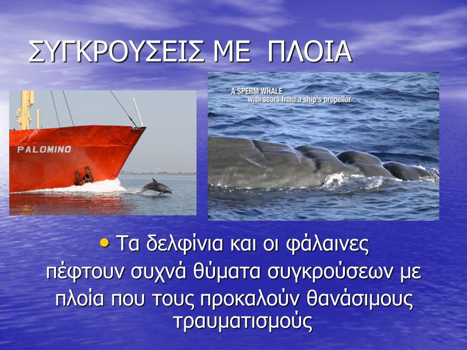 ΨΑΡΑΔΕΣ Ψαράδες πυροβολούν ή και τραυματίζουν Ψαράδες πυροβολούν ή και τραυματίζουν με καμάκια τα δελφίνια γιατί θεωρούν ότι τους τρώνε τα ψάρια.