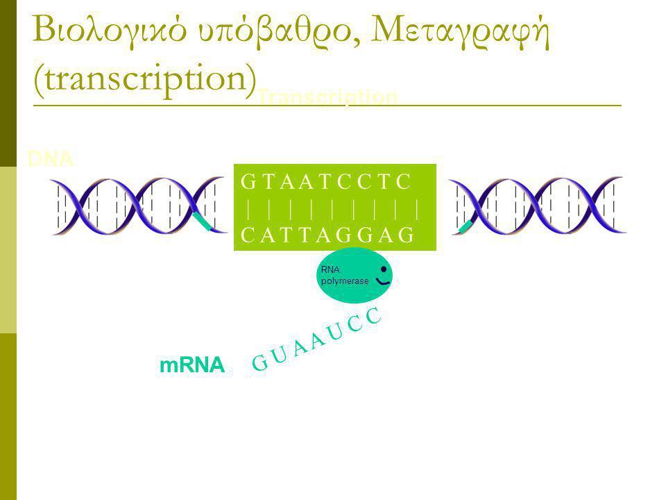 G T A A T C C T C | | | | | | | | | C A T T A G G A G Βιολογικό υπόβαθρο, Μεταγραφή (transcription) G T A A T C C T C | | | | | | | | | C A T T A G G A G DNA G U A A U C C RNA polymerase mRNA Transcription