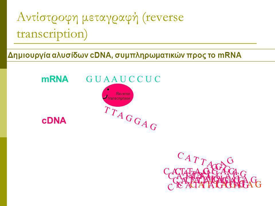 Αντίστροφη μεταγραφή (reverse transcription) Δημιουργία αλυσίδων cDNA, συμπληρωματικών προς το mRNA G U A A U C C U C Reverse transcriptase mRNA cDNA C A T T A G G A G T T A G G A G C A T T A G G A G