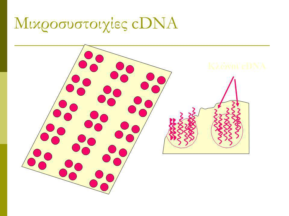 Πειράματα με μικροσυστοιχίες (microarrays) cDNA Συγκέντρωση mRNA, σε διαφορετικά περιβάλλοντα  Διαφορετικοί ιστοί, ίδιος οργανισμός (εγκέφαλος, συκώτ