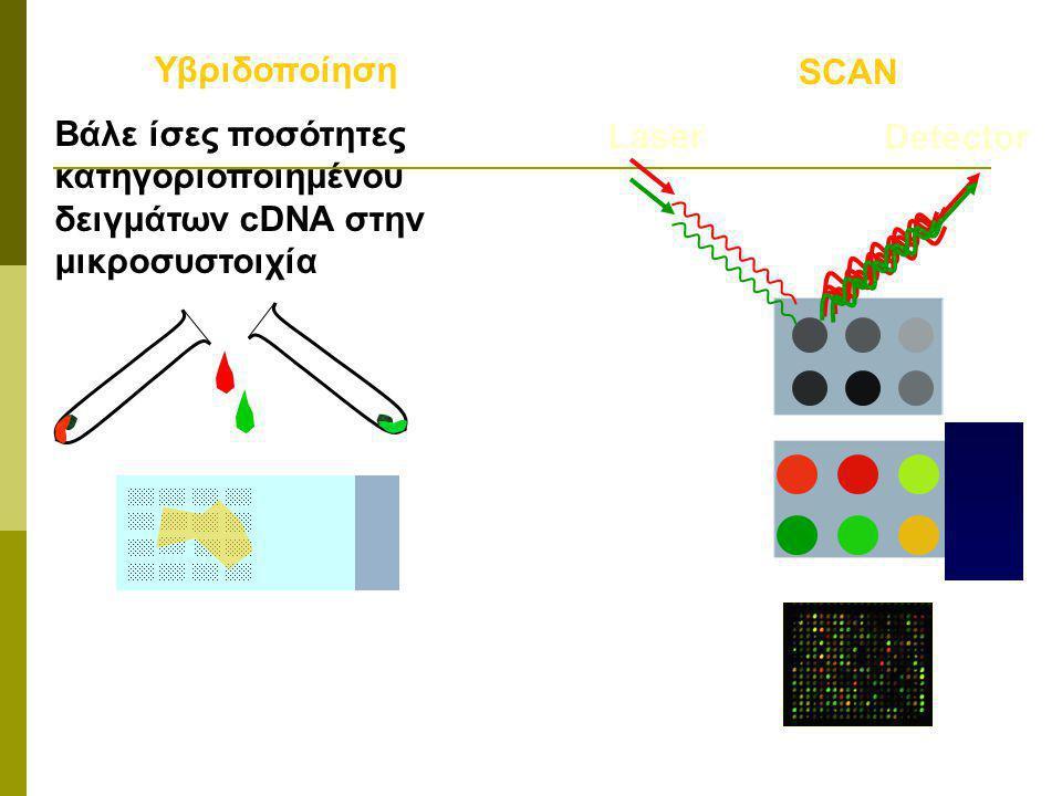 cDNA microarrays Σύγκριση έκφρασης, δύο δειγμάτων PRINT Γονίδιο cDNA σε κάθε θέση Δείγματα cDNA κατηγορ. red/green e.g. Rna αναφοράς (reference)/ Rna