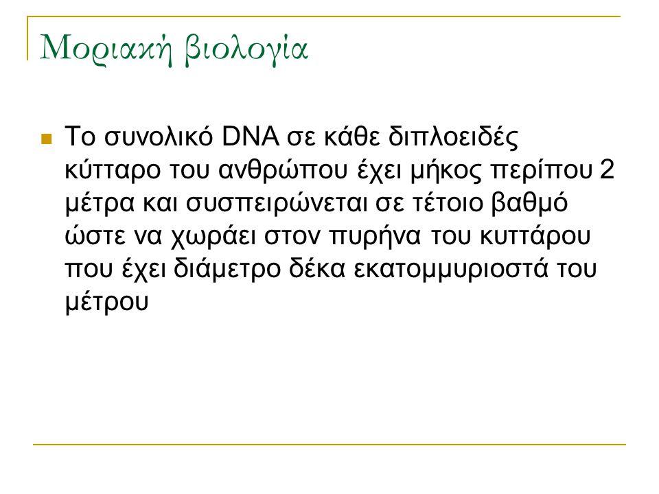 Μοριακή βιολογία Το συνολικό DNA σε κάθε διπλοειδές κύτταρο του ανθρώπου έχει μήκος περίπου 2 μέτρα και συσπειρώνεται σε τέτοιο βαθμό ώστε να χωράει σ