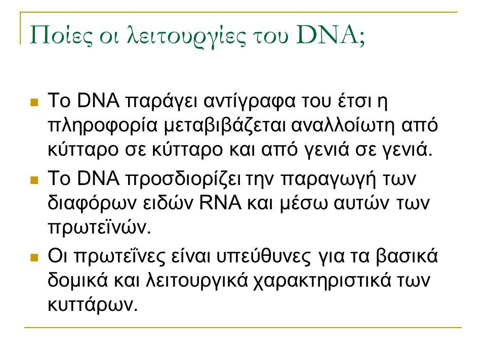 Ποίες οι λειτουργίες του DNA; Το DNA παράγει αντίγραφα του έτσι η πληροφορία μεταβιβάζεται αναλλοίωτη από κύτταρο σε κύτταρο και από γενιά σε γενιά. Τ