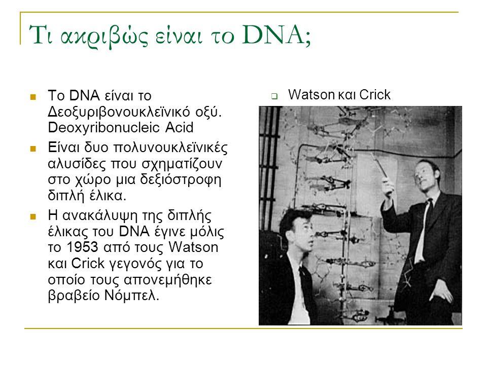 Τι ακριβώς είναι το DNA; Το DNA είναι το Δεοξυριβονουκλεϊνικό οξύ. Deoxyribonucleic Acid Είναι δυο πολυνουκλεϊνικές αλυσίδες που σχηματίζουν στο χώρο