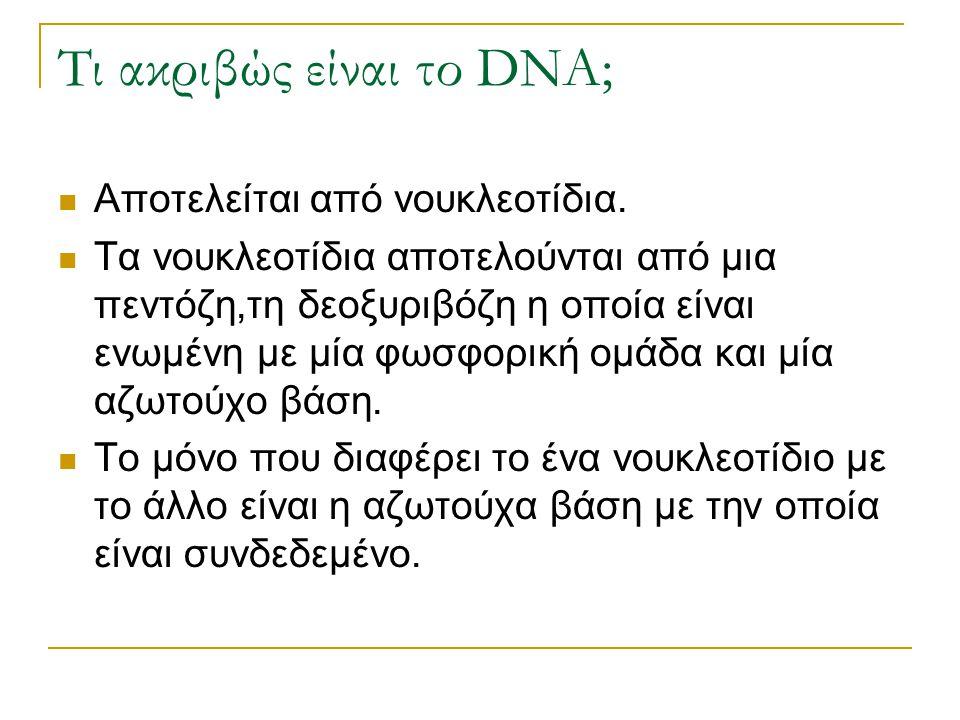 Τι ακριβώς είναι το DNA; Αποτελείται από νουκλεοτίδια. Τα νουκλεοτίδια αποτελούνται από μια πεντόζη,τη δεοξυριβόζη η οποία είναι ενωμένη με μία φωσφορ