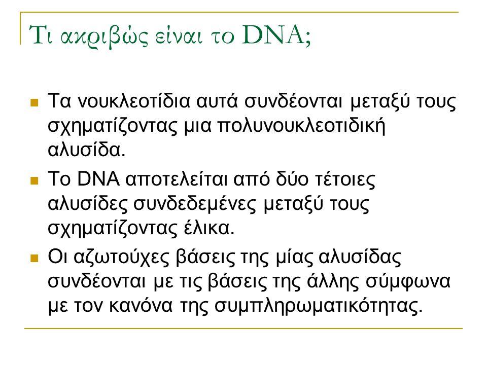 Τι ακριβώς είναι το DNA; Τα νουκλεοτίδια αυτά συνδέονται μεταξύ τους σχηματίζοντας μια πολυνουκλεοτιδική αλυσίδα. Το DNA αποτελείται από δύο τέτοιες α